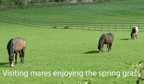 Visiting Mares
